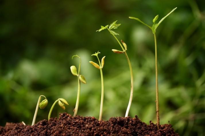 six seedlings growing from soil