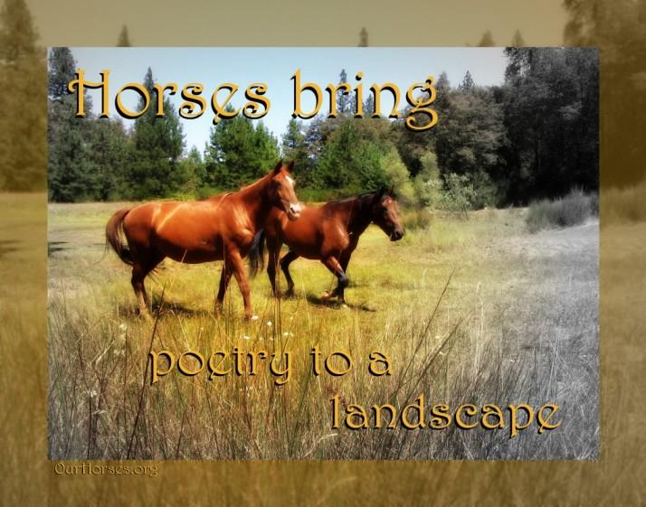 horse poetry