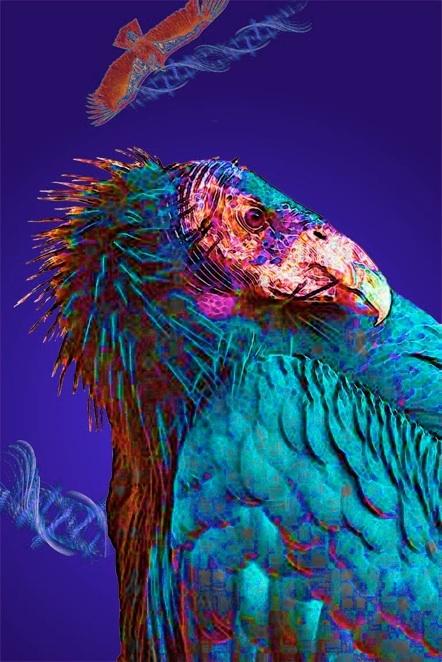 California Condor, by artist Marv Lyons - http://www.pinterest.com/pin/45317539970784021/