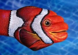 Hand painting by Guido Daniele - clown fish